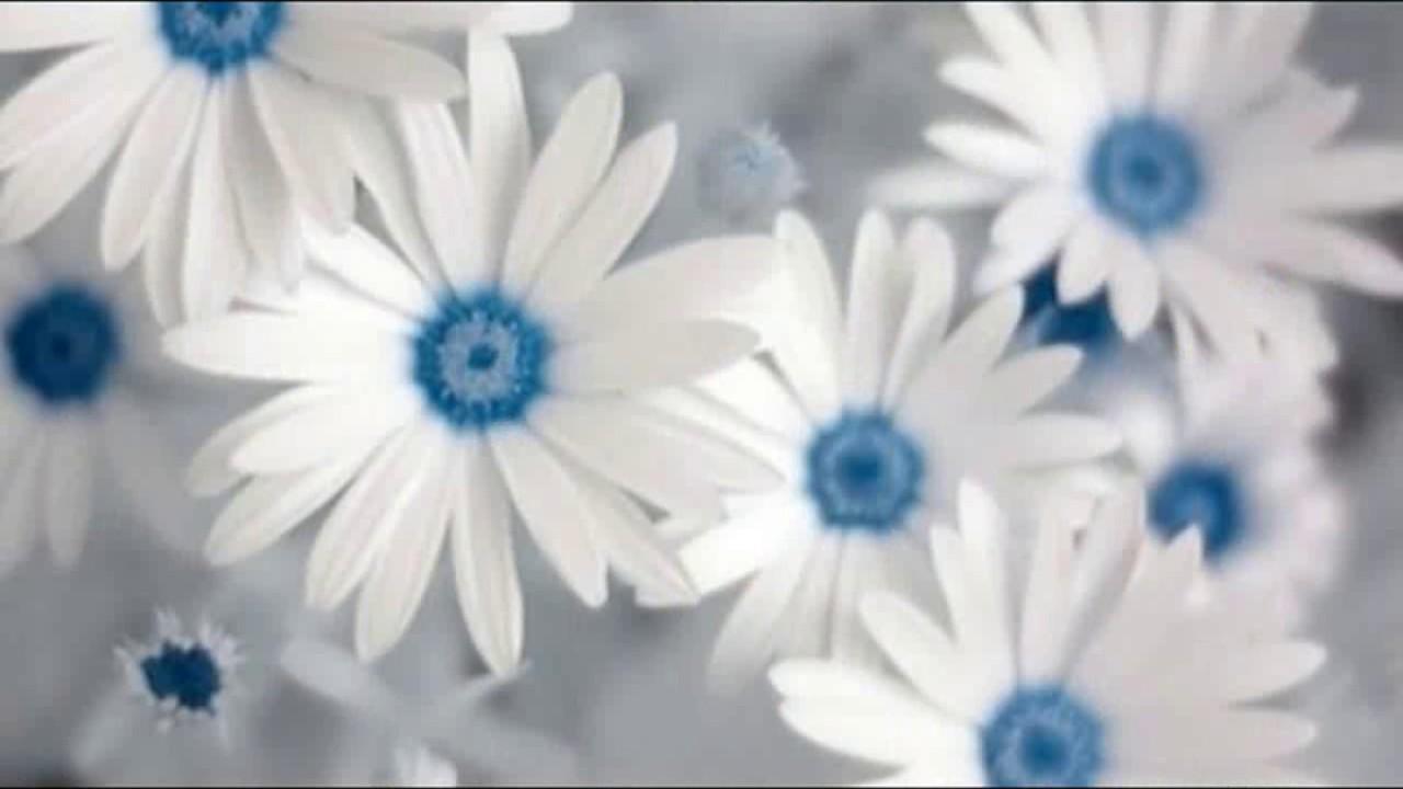 White flowers wallpaper whatsapp status images youtube white flowers wallpaper whatsapp status images mightylinksfo