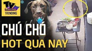 Chú chó 'HÚC VĂNG MÂM CƠM' của chủ đang gây sốt cộng đồng mạng mấy ngày qua