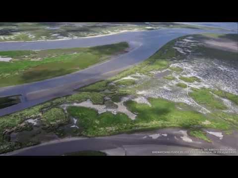 Humedal del Arroyo Maldonado - Día Mundial de los Humedales - 2 de Febrero de 2015 - Uruguay