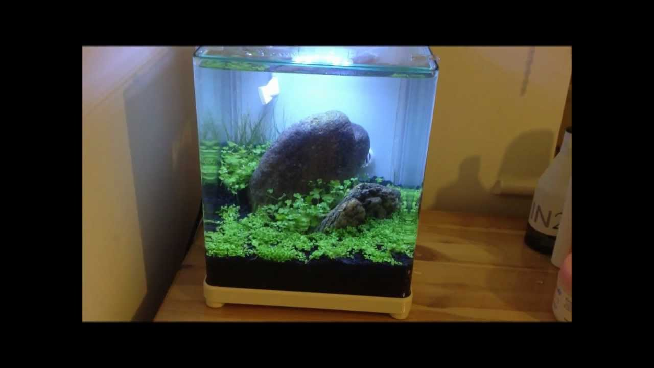 Aquarium nano fish tank - New Nano Tank For Shrimps