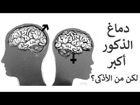 دماغ الذكور أكبر من دماغ الأناث، لكن من الأذكى؟
