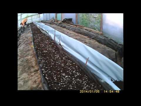 видео: как сажать и выращивать огурец   подготовка к высадке   финские колбаски