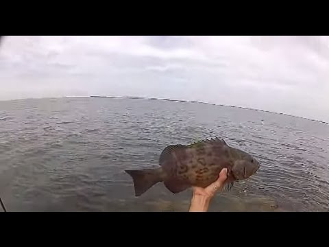 Fishing Roadside in St. Petersburg, Florida Catching Grouper and Flounder
