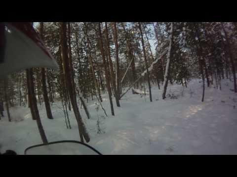 снегоход lynx yeti pro 550 в лесу 2