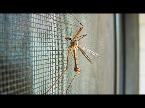 Комары в квартире - борьба с комарами
