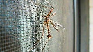 видео Самое эффективное средство от комаров / The best way vs mosquitoes