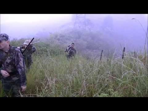 CHASSE RUSA EN NOUVELLE CALEDONIE . RUSA HUNTING IN NEW CALEDONIA