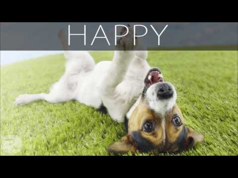 Cheerful Background Music for Videos - Happy and Upbeat