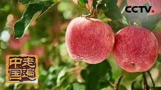 《走遍中国》系列片《森林之城》戈壁变绿城:阿克苏人如何让不毛之地的戈壁滩长出全国闻名的红苹果呢?(1)20190626 | CCTV中文国际