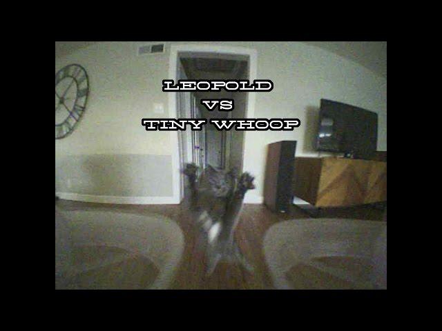 Leopold vs Tiny Whoop