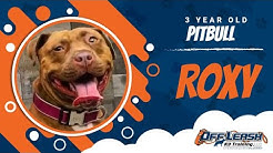 Roxy, pitbull| Best pitbull trainers| Best obedience trainers| dog training Rochester NY