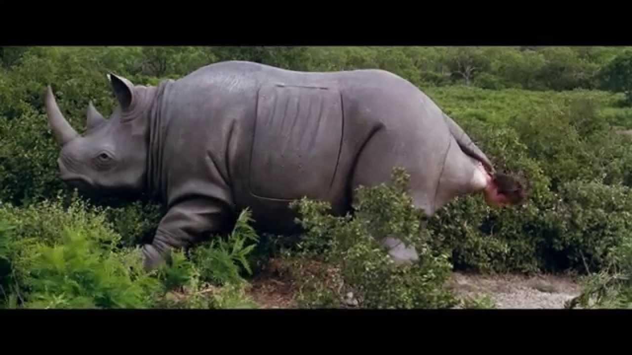 Ace ventura rinoceronte