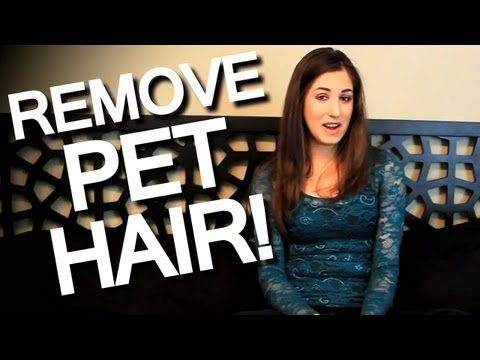How to Remove Pet Hair Off Furniture, Clothing and Linens! Easy Cleaning Ideas! (Clean My Space)