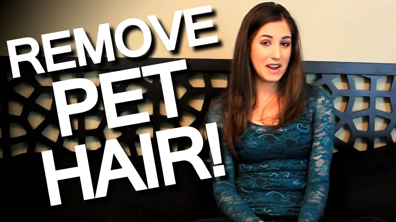 How To Remove Pet Hair Off Furniture Clothing And Linens Easy Cleaning Ideas Clean My Space