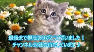 ご視聴ありがとうございます。チャンネル登録して頂けたら、とっても励みになります。よろしくお願いします♪【nekoの部屋】 thumbnail