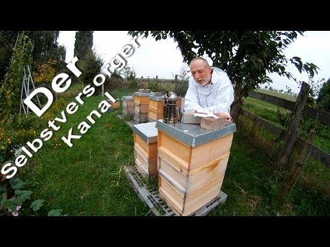 Honigbienen im Herbst Update