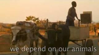 Mozambican Livestock Song