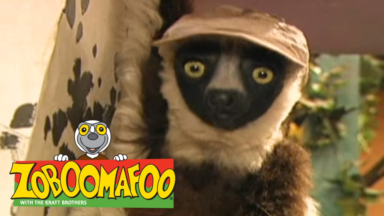 Zoboomafoo 132 - Spots and Stripes (Full Episode) - YouTube