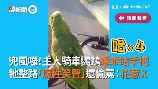 鸚鵡乖乖站手把  牠整路「魔性笑聲」還偷罵:花惹X|鸚鵡|寵物