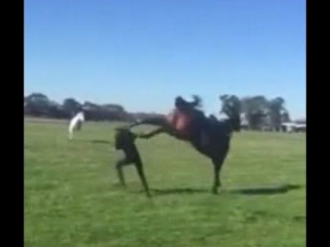 Horse KICKS Woman in FACE - KO