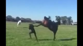 Horse KICKS Woman in FACE - KO