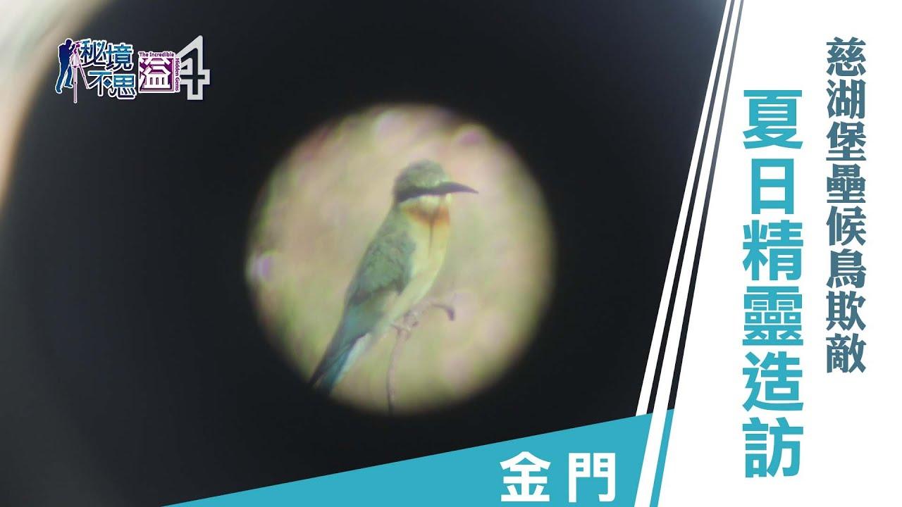 【安心國旅】振興台灣 何處去|夏日精靈造訪 金門慈湖堡壘候鳥欺敵