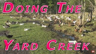 Ducks @ Yard Creek & End of Day Live Stream thumbnail
