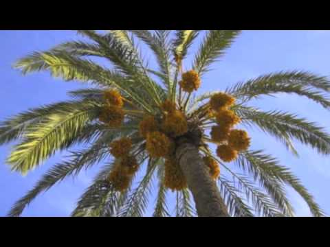 Desert Biome Commercial