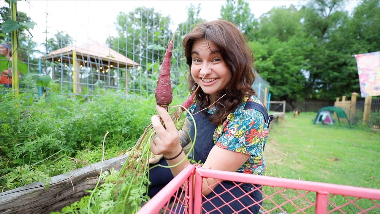 A storm, or not? (At least I finally harvested the carrots)   VLOG