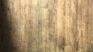видео древесина — Керамогранит