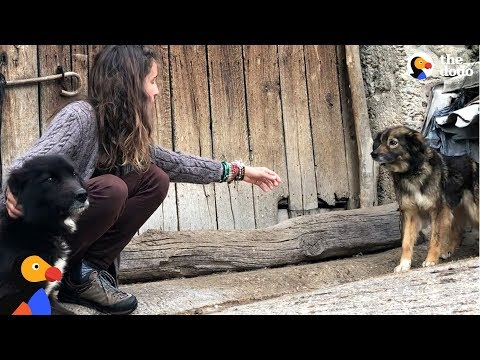 Woman Keeps Trying To Rescue Dogs Chained Up Outside | The Dodo