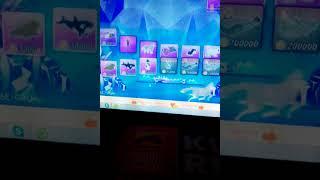 Шоу дельфинов 8