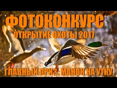 Профессиональная охота на гуся. (онлайн видео)