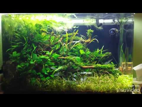 jungle style 100 liter aquarium youtube. Black Bedroom Furniture Sets. Home Design Ideas