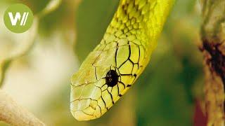 Die giftigsten Schlangen der Welt: wie man mit gefährlichen Tieren richtig umgeht