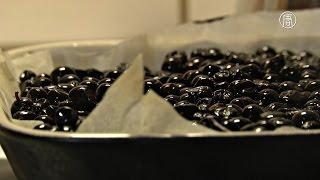 Блюда в лапландских кафе приправляют северной ягодой (новости)