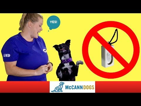 Clicker Training Without A Clicker - Professional Dog Training Tips