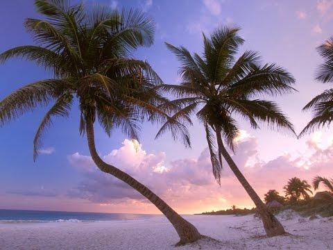 Фото слайд-шоу Природа. Пальмы. Часть 1.
