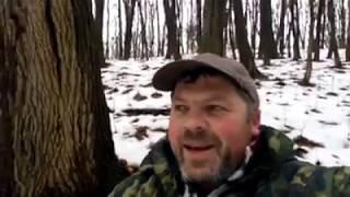 На Кременеччині збирають зимові опеньки