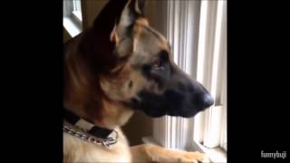 funny german shepherd videos compilation 2005 2014 best ever 18