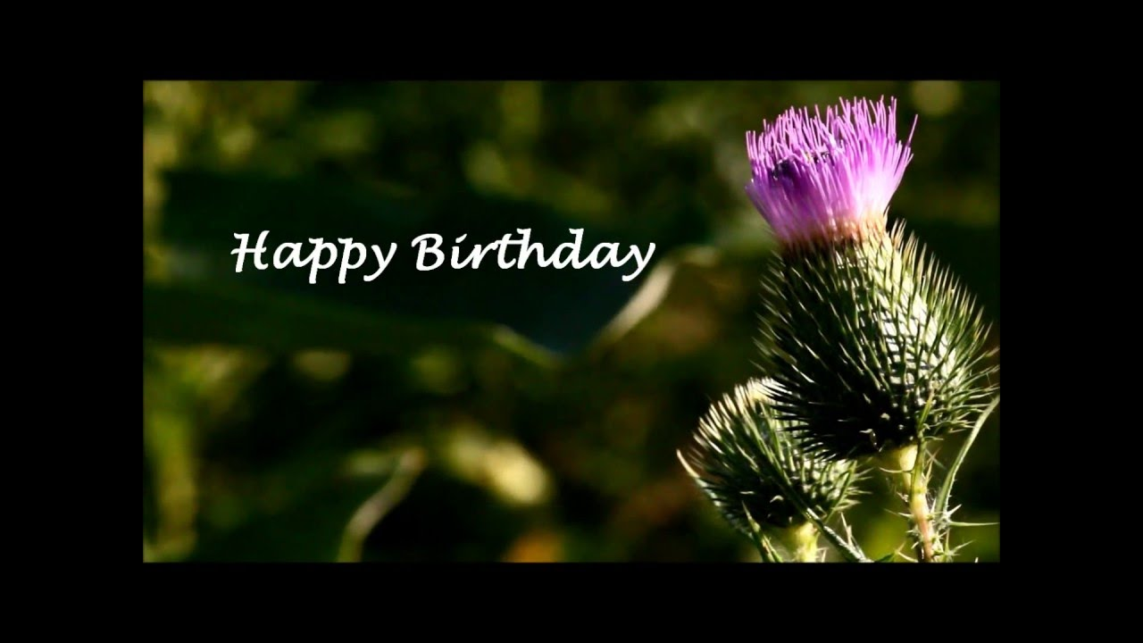 scottish thistle happy birthday e card youtube