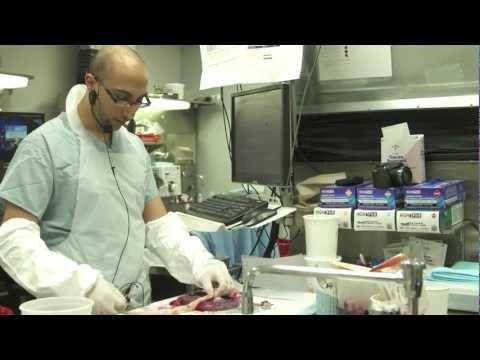 Mount Sinai School of Medicine, Department of Pathology