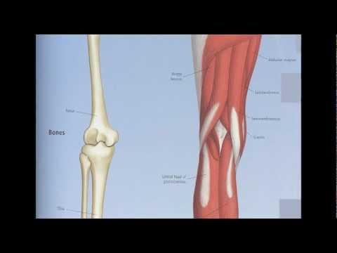 Balla Tünde - Aziza -  A medence és a láb rövid anatómiája