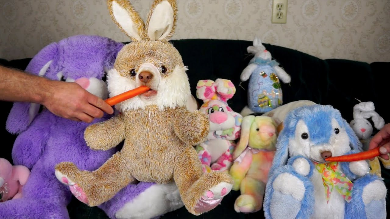 Stuffed Bunnies Come to Life Funny Dogs Maymo & Penny