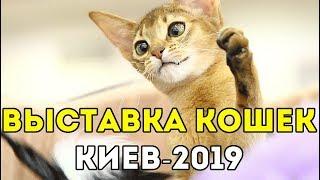 ВЫСТАВКА КОШЕК И КОТОВ В КИЕВЕ 2019 😸