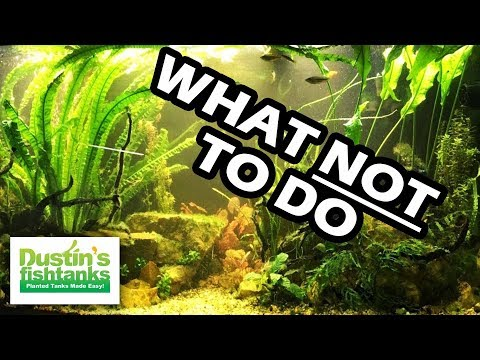 What NOT TO DO with YOUR Aquarium