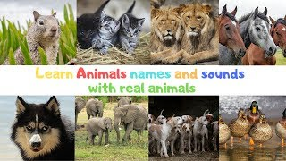Learn the Animals names and sounds For Kids - Funny Animals