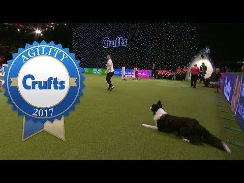Agility - Crufts Singles Heat - Large (Agility) | Crufts 2017