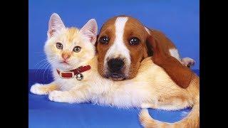 Самые милые фото кошек и собак. Просто НЯ.
