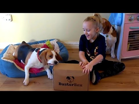 Surprising My Beagle Dogs with Busterbox | Cute Dogs Unboxing Toys and Treats